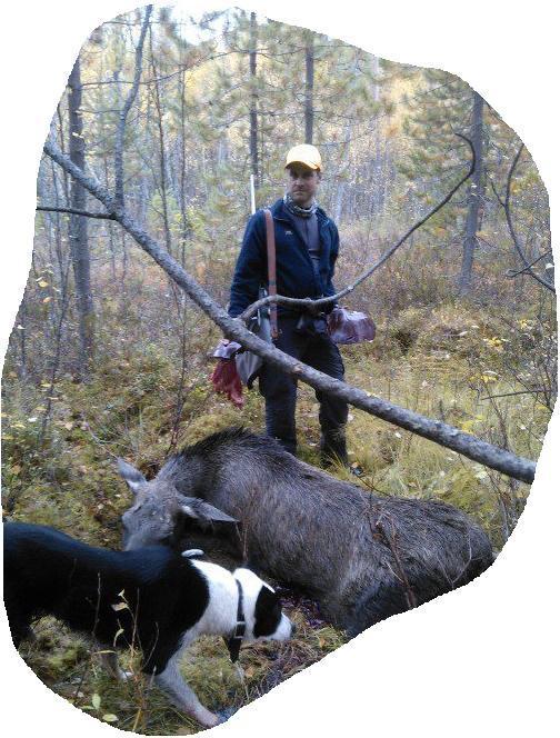 Markägare, jägare och jakthund - samarbete i älgförvaltningen