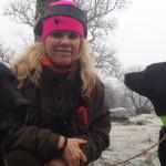 Jaktlabradorer med hundförare. vinterdag