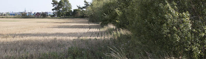 Gräs, diken, buskar och träd skapar bättre förutsättningar för småvilt i odlingslandskapet. Foto Magnus Rydholm