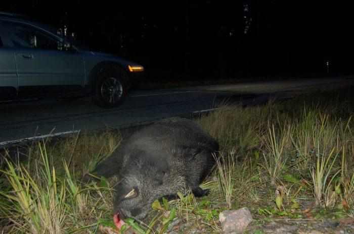 Jagare vagrar eftersok som protest