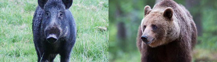 Två nästan identiska händelser, men med olika djur, gav helt olika reaktioner hos allmänheten. Foto Mostphotos